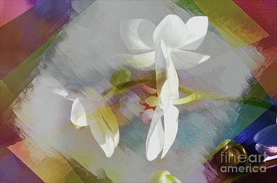 Photograph - Floral Abstract  by Elaine Manley