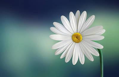 Flower Art Print by Bess Hamiti