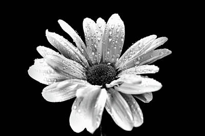Photograph - Flower In Black And White by Lilia D