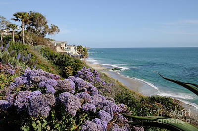 Flowers At The Beach Art Print by Timothy OLeary