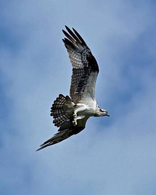Photograph - Flying High by Carol Bradley