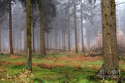 Photograph - Fog In Forest by Patricia Hofmeester