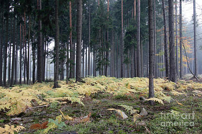 Photograph - Fog In The Forest With Ferns by Michal Boubin