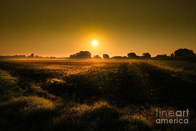 Sun Rays Photograph - Foggy Morning by Franziskus Pfleghart
