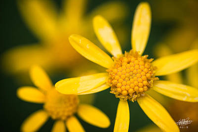 Photograph - Forest Flower by Adnan Bhatti