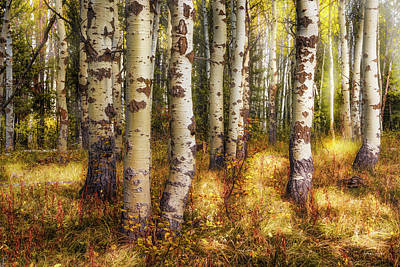 Photograph - Forest Glow by Leland D Howard