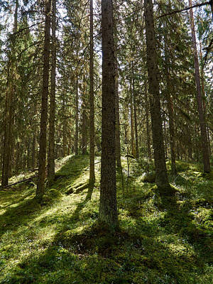 Photograph - Forest by Jouko Lehto