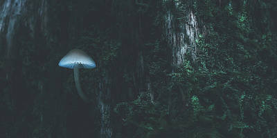 Photograph - Forest Mushroom by Pixabay