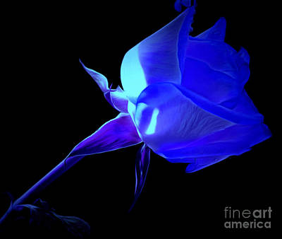 Blue Flowers Photograph - Forgiveness by Krissy Katsimbras