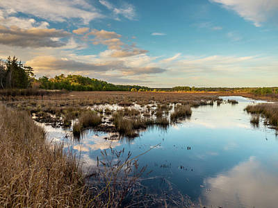 New Jersey Pine Barrens Photograph - Franklin Parker Preserve Landscape by Louis Dallara