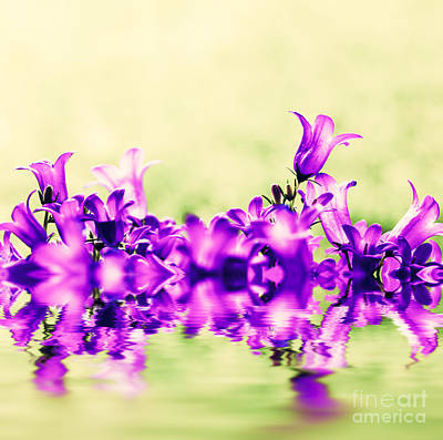 Backdrop Photograph - Fresh Flowers Close-up On Grass Natural Background by Michal Bednarek