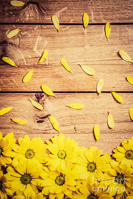 Border Photograph - Fresh Spring Flowers And Petals On Rustic Wood by Michal Bednarek