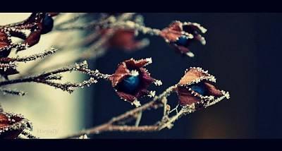 Photograph - Frost by Marija Djedovic