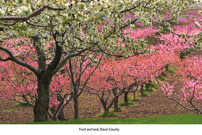 Photograph - Fruit Orchard by Utah Images