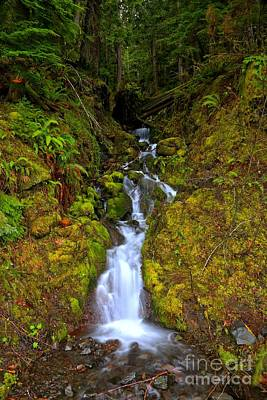 Angeles Forest Photograph - Streaming In The Olympic Rainforest by Adam Jewell