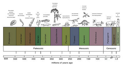 Triassic Period Photograph - Geologic Time Line by Spencer Sutton