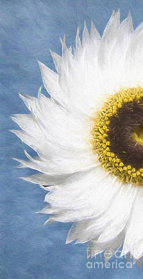 Daiseys Painting - Gerbera Daisey by Jim  Hatch