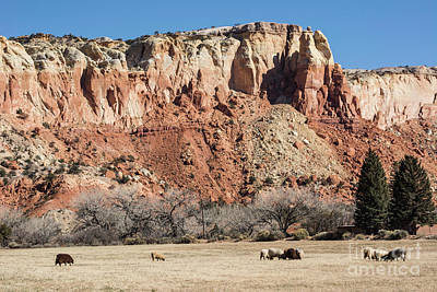 Photograph - Ghost Ranch by John Greco