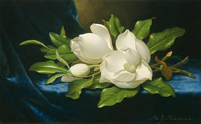 Comic Character Paintings - Giant Magnolias On A Blue Velvet Cloth by Martin Johnson Heade