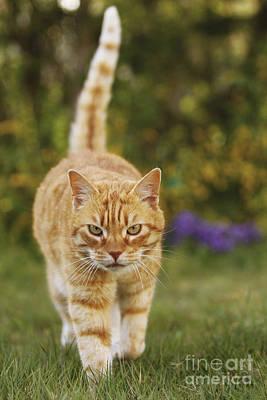 Ginger Cat In Garden Art Print by Jean-Michel Labat