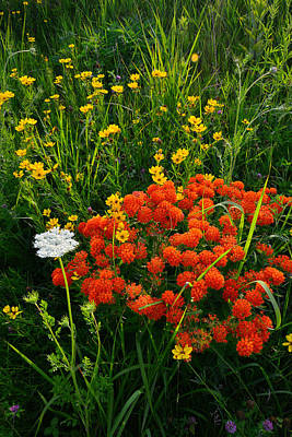 Photograph - Glacial Wildflowers by Ray Mathis