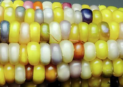 Photograph - Glass Gem Corn by Mark Dahmke