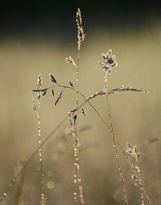 Photograph - Glisten by Fraida Gutovich