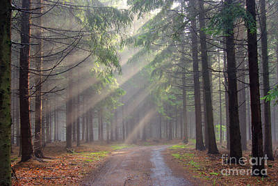 God Beams - Coniferous Forest In Fog Art Print by Michal Boubin