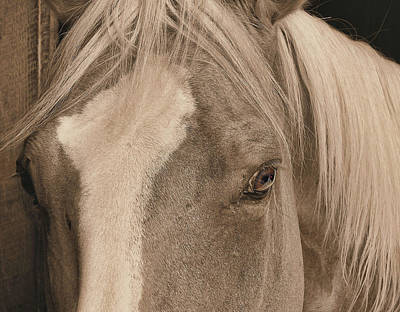 Golden Palomino Art Print by JAMART Photography