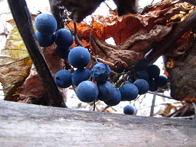 Grapes Photograph - Grapes by Jackie Russo