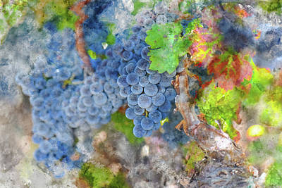 Photograph - Grapes On The Vine In The Autumn Season by Brandon Bourdages