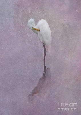 Photograph - Great Egret by Charles Owens