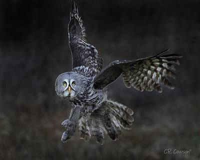 Photograph - Great Gray Owl by CR Courson