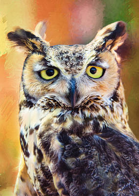 Photograph - Great Horned Owl by Barbara Manis