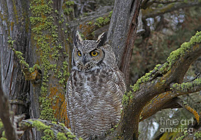 Rust Wall Art - Photograph - Great Horned Owl by Gary Wing