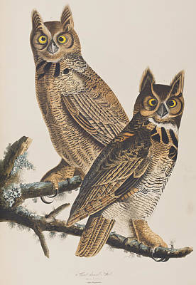 Colored Owl Painting - Great Horned Owl by John James Audubon