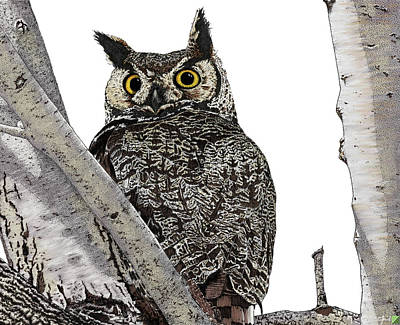 Drawing - Great Horned Owl by Marcus England