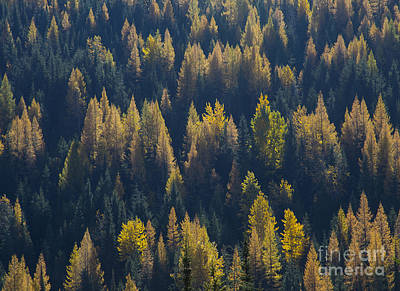 Photograph - Green And Gold by Idaho Scenic Images Linda Lantzy
