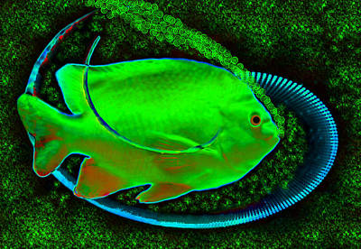 Painting - Green Fish by David Lee Thompson