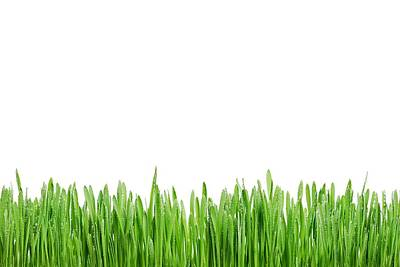 Photograph - Green Grass by Tilen Hrovatic
