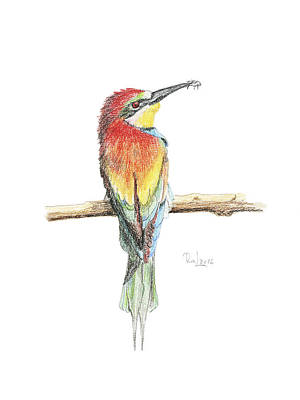 Painting - Gruccione - Bee Eater - Merops Apiaster by Raffaella Lunelli
