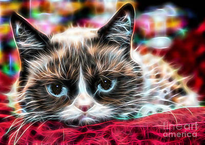 Pets Art Mixed Media - Grumpy Cat by Marvin Blaine