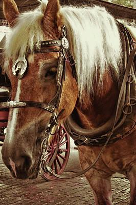 Haflinger Pony Art Print by Dressage Design