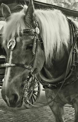 Photograph - Haflinger by JAMART Photography