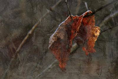 Photograph - Hanging On by Jim Vance