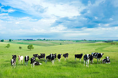 Friesian Photograph - Happy Cows by Todd Klassy