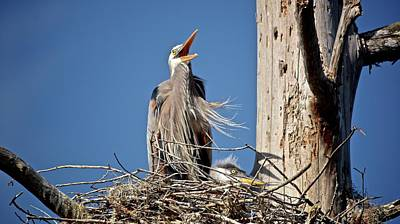 Photograph - Happy Heron by Carol Bradley