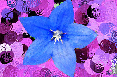 Womens Empowerment - Happy Solitary Blue Flower by Bruce Nutting