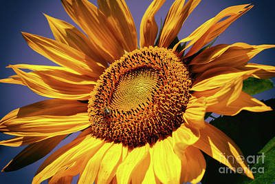 Photograph - Happy Sunflower by Mariola Bitner