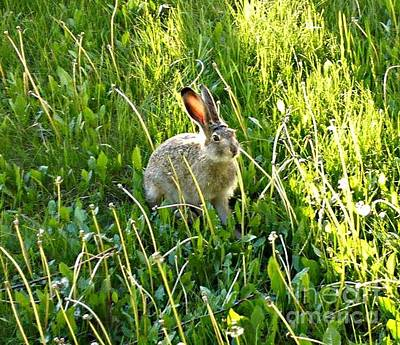 Photograph - Hare by 'REA' Gallery